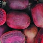 актинидия аргута Пурпурна Садова-3